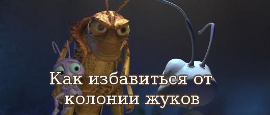 избавиться от колонии жуков